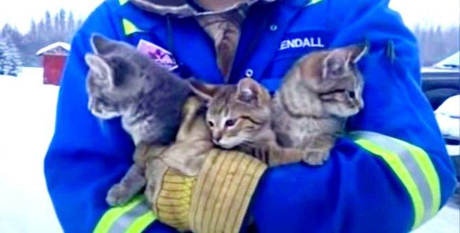 雪の中で尻尾が凍り動けない子猫たち…とっさの機転で救出成功!