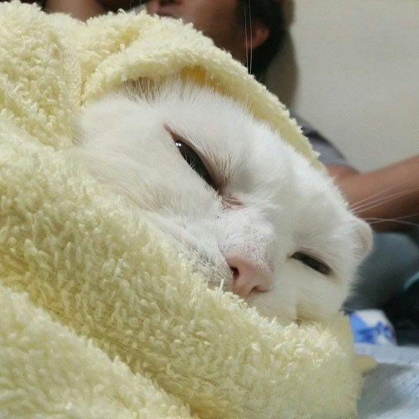 猫もお湯が気持ちいい?適度な温度と乾かし方