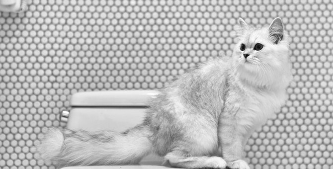 猫のマーキングを消臭する方法!手作りスプレーの作り方、おすすめ商品まで