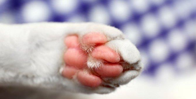 猫の肉球がカサカサに!考えられる原因と対処法