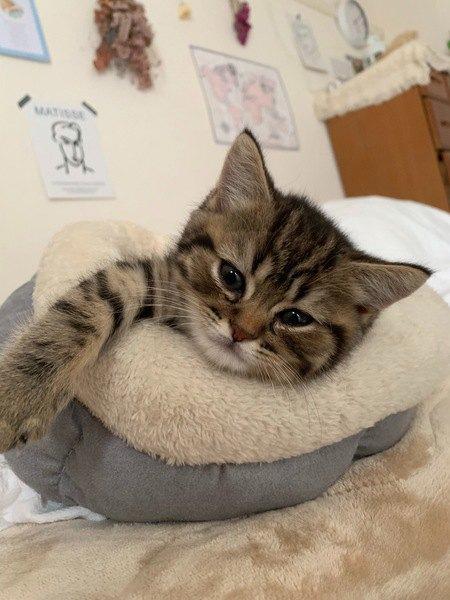 猫が前足でトントン起こしにくる時の心理5つ