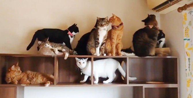エアコン解禁日渋滞!吹き出し口にずらっと並ぶ猫さん達が圧巻と話題