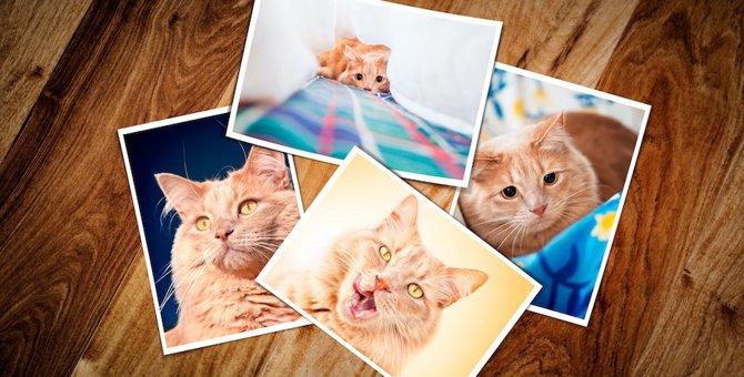 猫の命日の過ごし方5つ