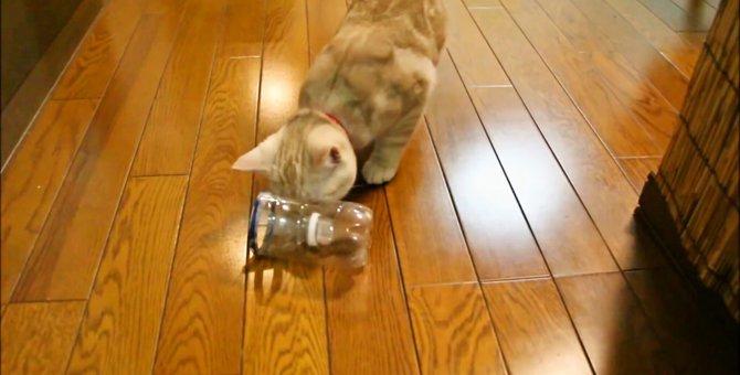 食べたくてもなかなか食べられない!ペットボトルダイエットとは?