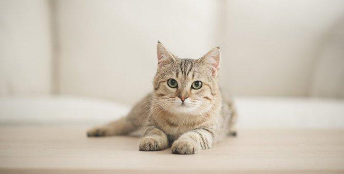 猫が『大嫌いな人』だけに見せるサイン4つ