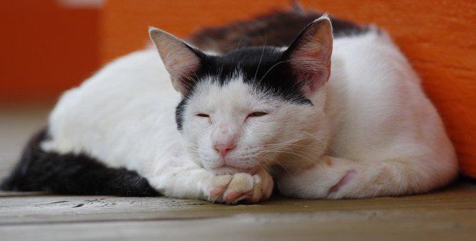 死期を悟った猫がする行動5つ