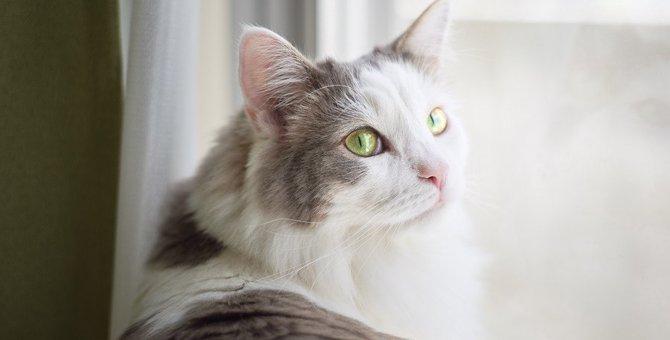 猫からの信頼を無くしてしまう飼い主のタブー行為4つ