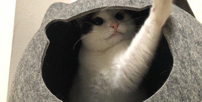 猫は日本にいつ頃来たの?日本における猫の歴史を徹底解説
