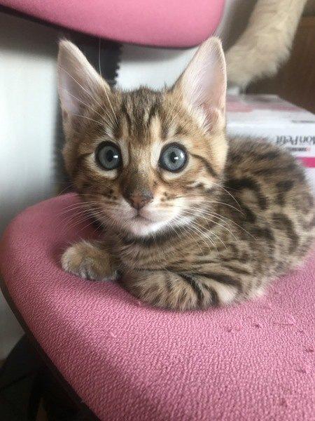 猫から愛される人の共通点5選!あなたはどれくらい当てはまりますか?♡