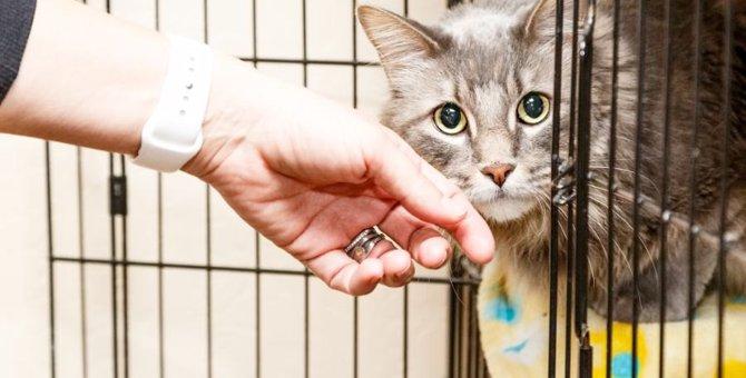 猫の留守番にケージは有効?使う時の注意点4つ