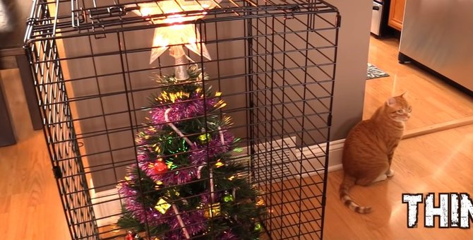 猫のいるお家でも楽しくクリスマスを迎えるための作戦!