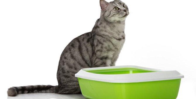 猫のおしっこの状態で見る健康チェック