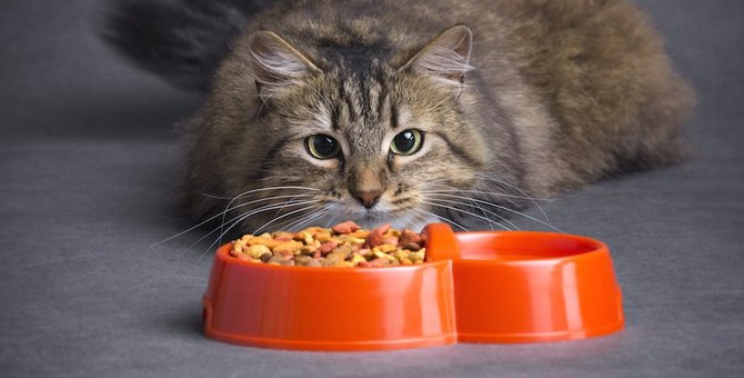 猫とキャットフードの関係!食べない時はどうするの?