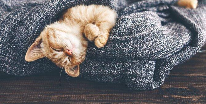 猫が『リラックスしやすい環境』2選!愛猫の住環境を見直してみて!