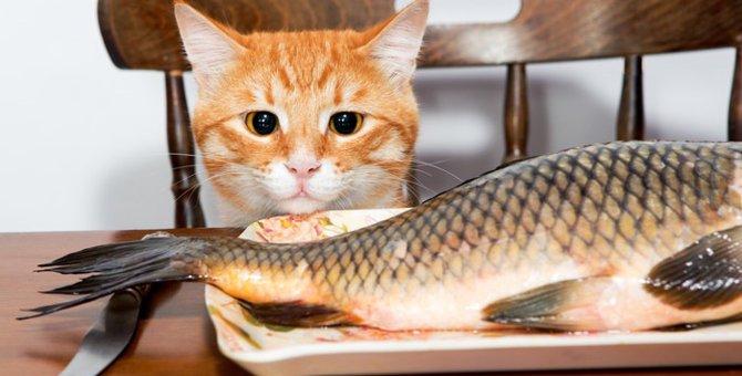 猫に生魚を与える時の注意 お刺身をあげる時は慎重に!!