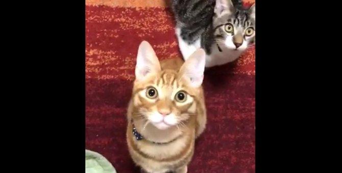 天井の「とある物」に目を奪われる兄弟猫さんに注目集まる!