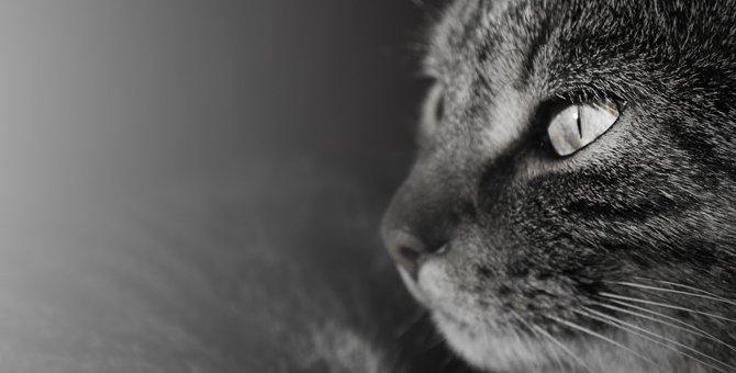 地震が起こる前にする猫の不思議な6つの行動