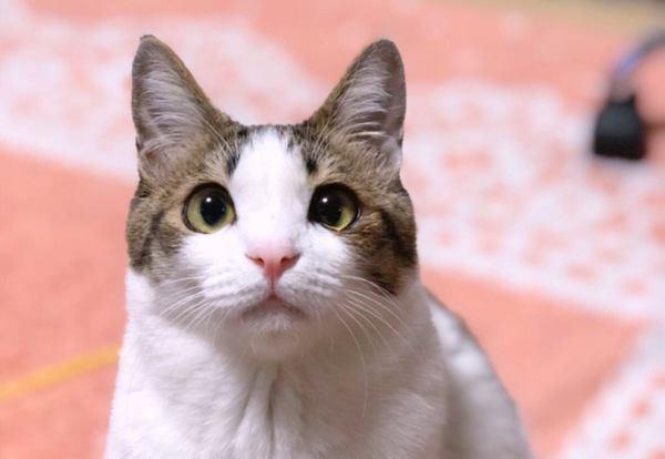 自己主張が強い猫の扱い方4つ