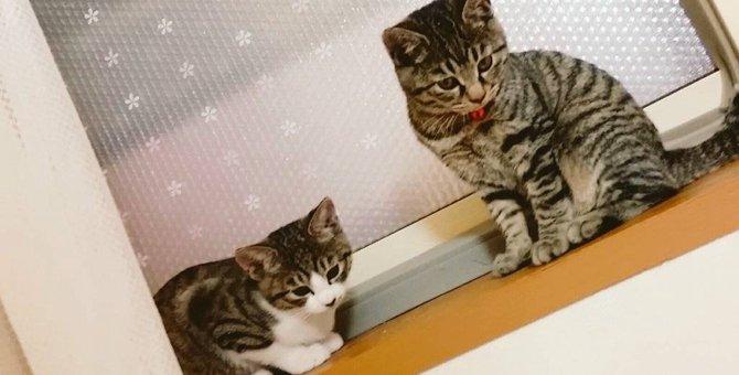 生後4ヶ月の猫の問題行動をなくす方法