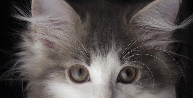 猫の耳ダニの症状や治療法、予防の方法について