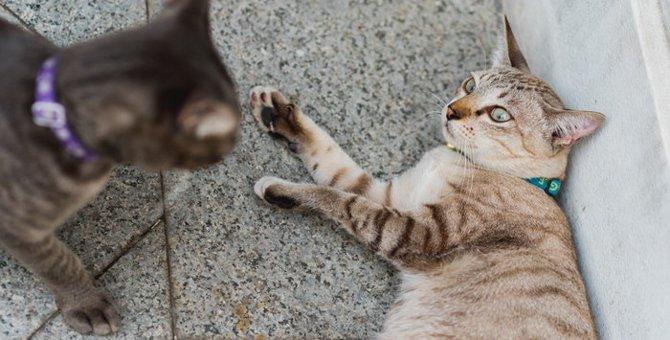 猫同士にもいじめはある?原因や仲良くなる方法