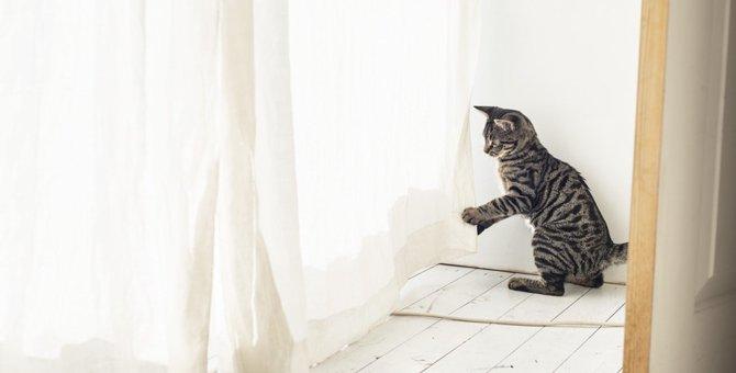 猫がカーテンに登るのを止めさせる方法