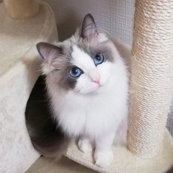 猫がたまらなく好きな人にだけする9つの仕草