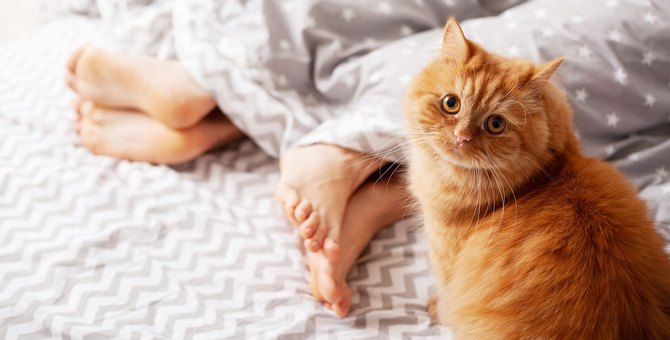 猫が『足の甲』に座るときの心理3選