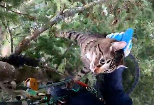 木から降りられない猫。強風と落ちれば交通量の激しい道…絶体絶命の救助