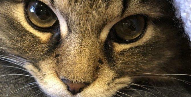 猫の毛が抜けやすい時期はいつ?換毛期にすべき対策4つ
