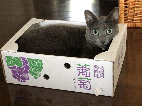 何してるの?猫のオモシロ行動4選