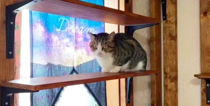 トラバサミで足を失った猫…愛に包まれ幸せな姿に感動!