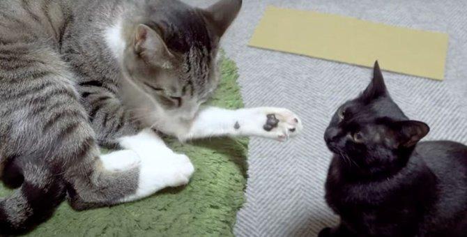 猫ちゃんの対決?!先に手を出したのはどっち?