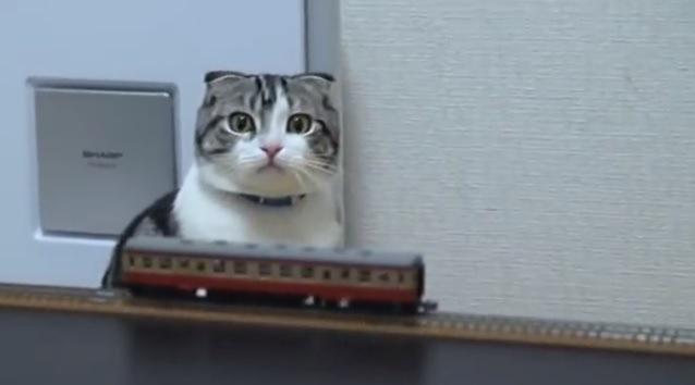 「おもしろい!でも怖~い!」猫ちゃん、初めての鉄道模型♪