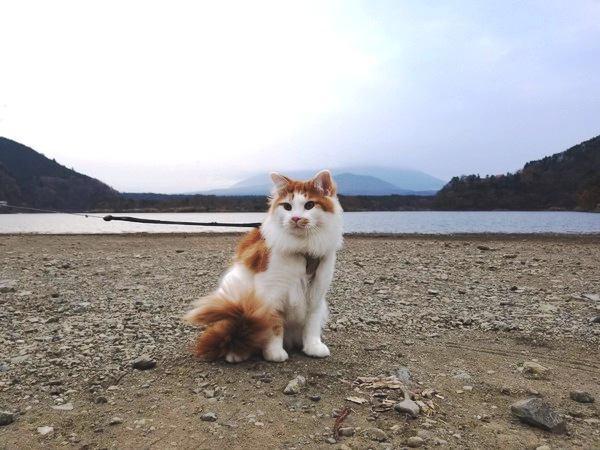 愛猫と散歩に行くメリットと注意点