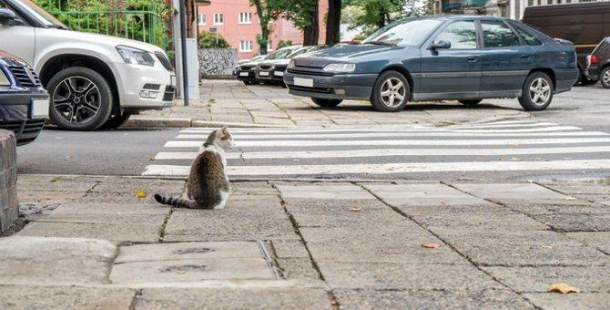 猫が交通事故に遭いやすい理由や対処の仕方
