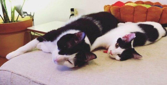 超人見知りの先住猫と新米猫の出会い…緊迫する2匹の猫の行く末は?