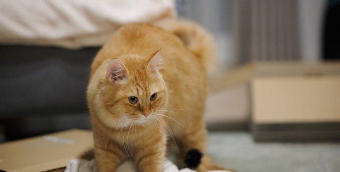 どんな時にする?猫が『ふみふみ』する3つのシーンとその意味