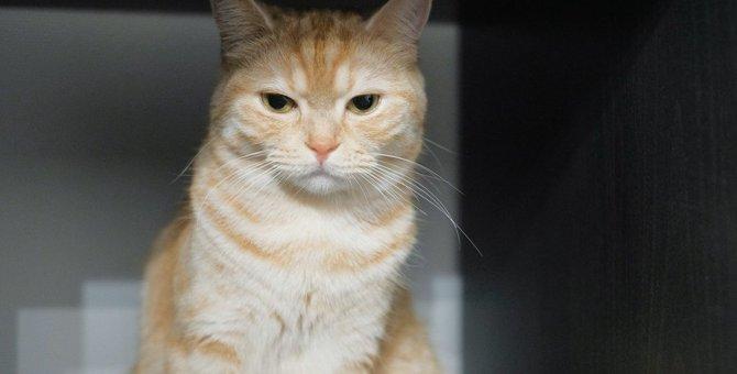 猫が『呆れてしまったとき』に見せるサイン5つ!呆れさせてしまう飼い主の行動とは?