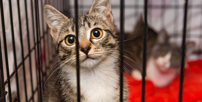猫のレスキューを消防はしてくれる?連絡する時の判断や団体