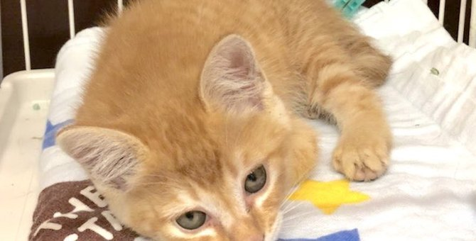 ひとりぼっち、ボロボロでさまよっていた2ヵ月の子猫を緊急保護!