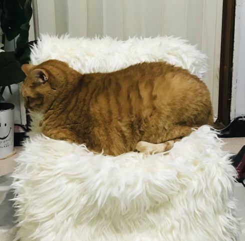 愛猫の為に猫用ソファを手作り!