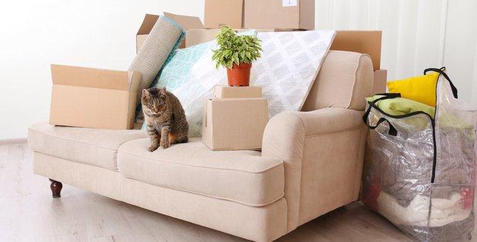 引っ越しで受けた猫のストレスを和らげるには?4つの方法