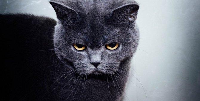 猫が嫌っている人にする態度5つ