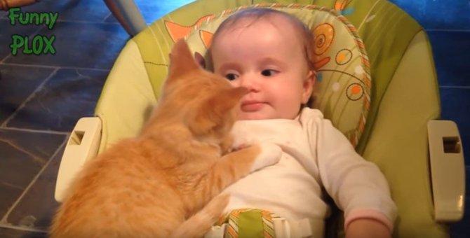 猫 vs. 乳児。かわいさ & 面白さ鉄板コンビの動画が大集合!