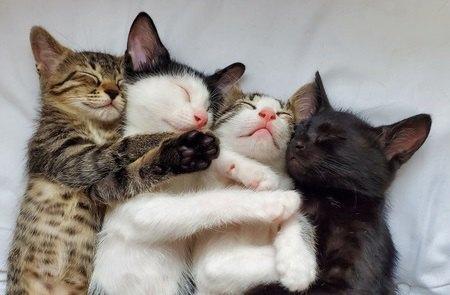 洋猫と和猫の違い3つ