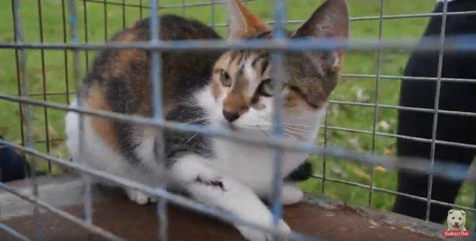 ハリケーンを生き延び、ケガをした猫を治療。被災地域の人と動物をケア