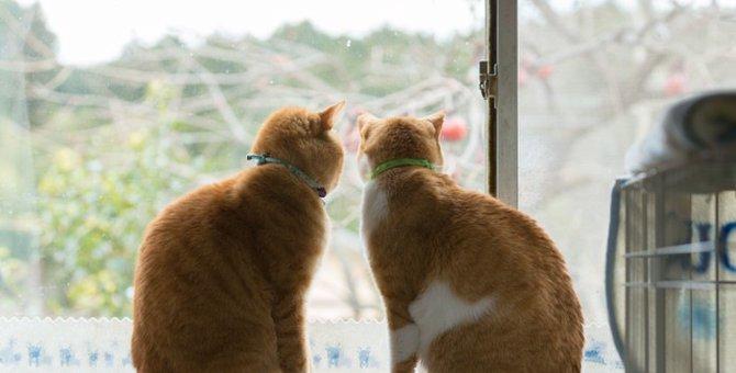 猫の膵炎について 症状と治療法など