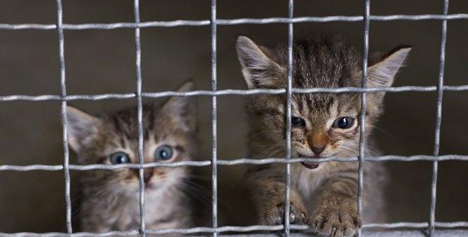 【善意の妨害】SNSで動物愛護ボランティアにやるべきでない4つのこと