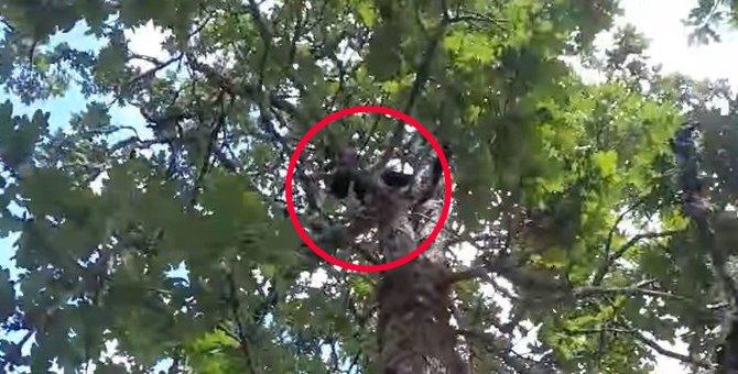 14日間も木の上にいる猫…飼い主の悲痛な叫びに駆けつけてレスキュー!